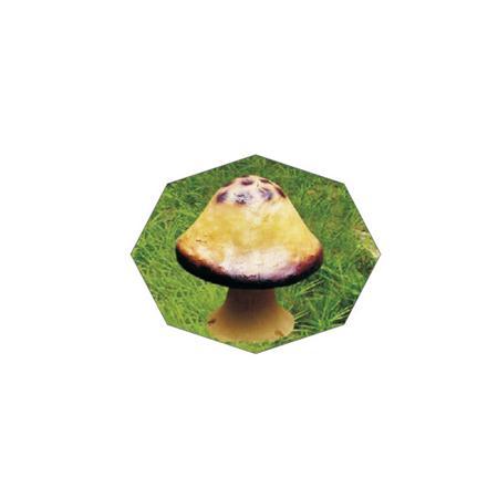 RY-213蘑菇